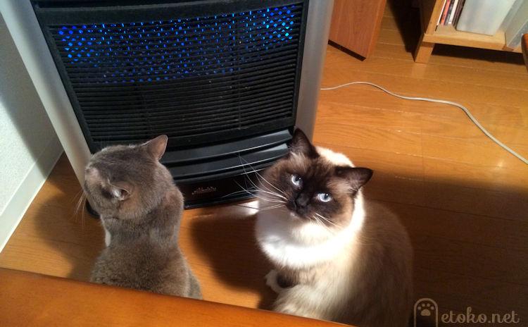 アラジンのファンヒーターの前に座り込んでいる猫たち