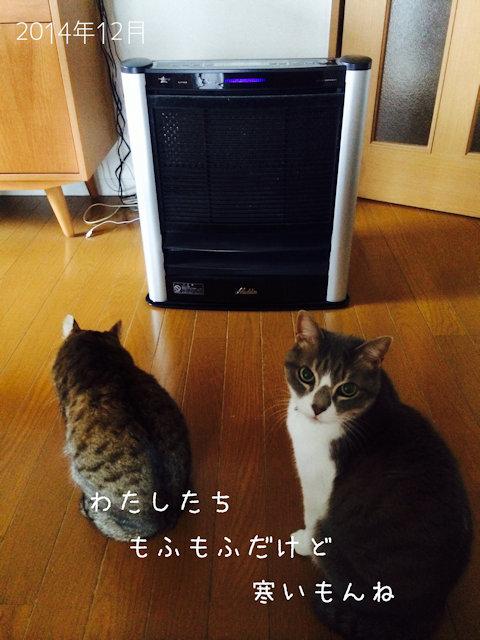 アラジンのファンヒーターの前で温風が出るのを待っている猫たち
