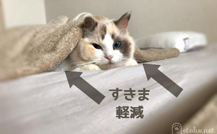ベッドに座るラグドールの上にタオルケットがかかっている