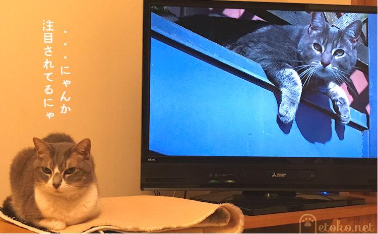 『世界ネコ歩き』の番組が始まるとテレビの横に座る猫
